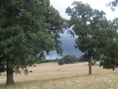 Storm cloud over pasture