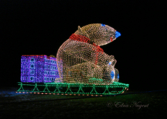 Festival of Lights Is This Weekend