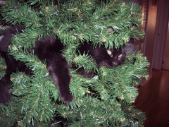 Kitten Inside Our Christmas Tree
