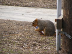 Squirrel and his cookie/windfarm