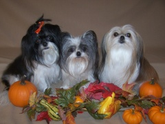 Our fall fur babies
