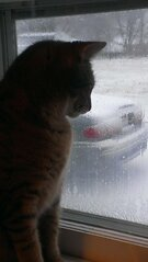 Kitty observing the snow...