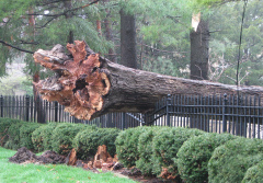 NEIGHBORHOOD STORM DAMAGE