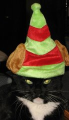 Sheba the Grinch