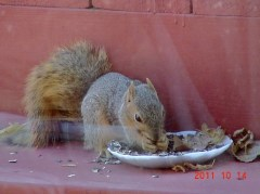 squirrels gotta eat too