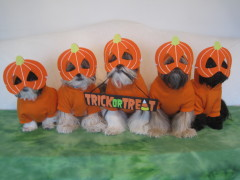 The Punkin Posse does tricks for treats!