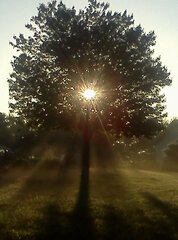 the sun lights up a tree