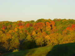 Fall view of trees from our deck