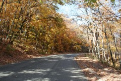 Fall Colors on Detwiller Drive