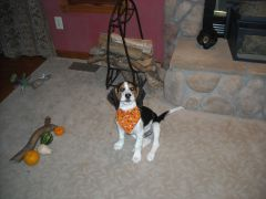 My First Howl-o-Ween