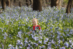 Spring Blue Bells as tall as Jacob