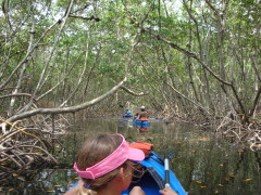 Sarasota Bay mangroves by kayak