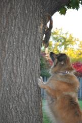 The squirrel staredown!