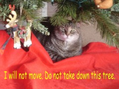 Cat loves sitting under Christmas tree.