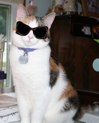 Missy is a Cool Cat with Shades