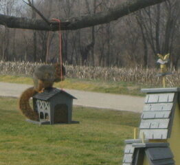 This sure ain't NUTS / Squirrel eating