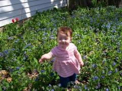 Baby in the Blue Bells