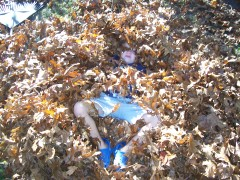 Griffin Hussey in the leaves