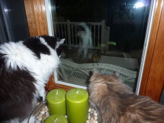 Cats Entertained by Baby Robin