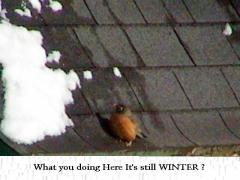 Cold Robin ,Back to early !