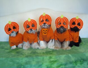 Trick or Treat from the Tzu Kids