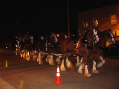 Clydesdale visit to Wyoming,IL