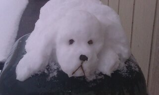 Every snowman should have a snow dog