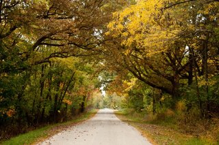 Country Fall Canopy