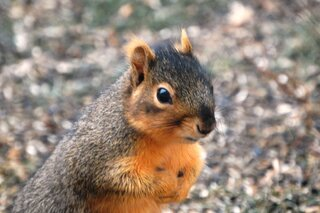 Portrait of a squirrel