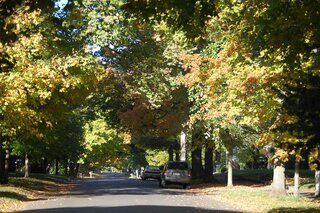 Fall Colors  3rd St Historic Delavan Il.