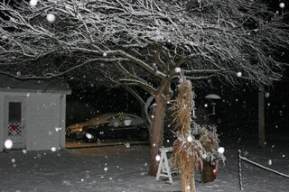 Nighttime Snowfall