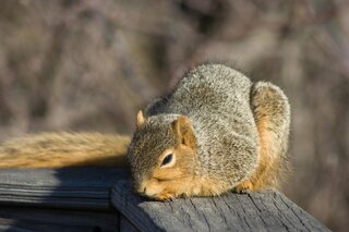 Squirrel Enjoying the Sun in Winter