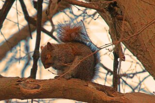 Squirrel Taking A Nap