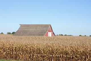 Barn In a  Field of Corn