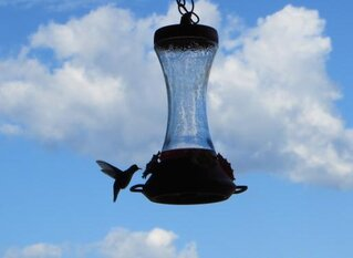 Enjoying Hummingbirds on a Summer Sunday