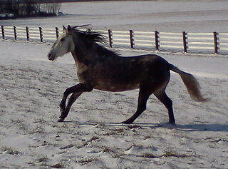 my wonderful horse!