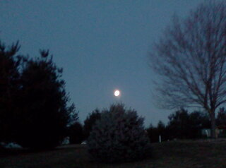moon sets over the trees!