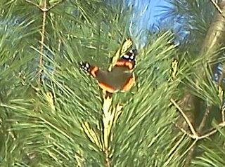 sunbathing butterfly