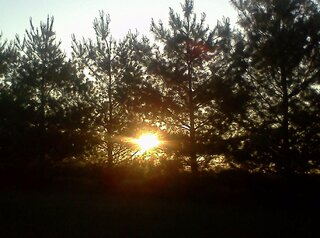 sunrise thru the trees