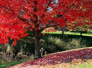 Fall photos from Steve Wilson, Groveland