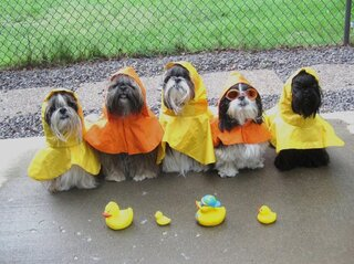 The Tzu Kids rain ready!!