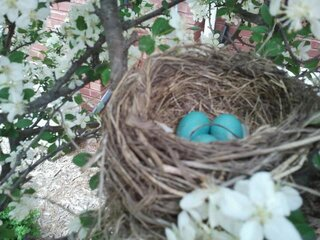 Beautiful Spring Nest