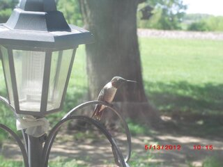 Hello Mr. Hummingbird!!!