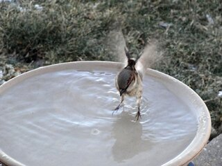 Splish-Splash in the Birdbath