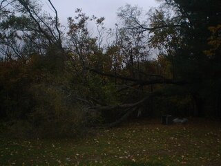 Wind takes down big part of Tree.