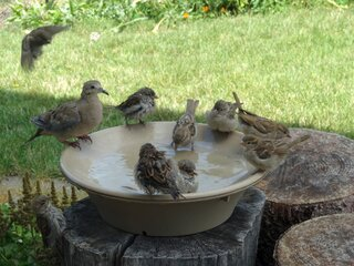 Birdie Pool Party