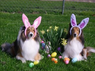 Easter bunnies  Whisper and Magic