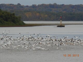 Waterfowl along the Illinois River