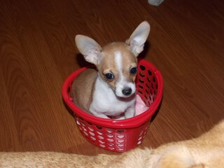 puppy in a heart shape basket