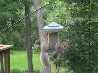 Squirrels Raid The Birdfeeder